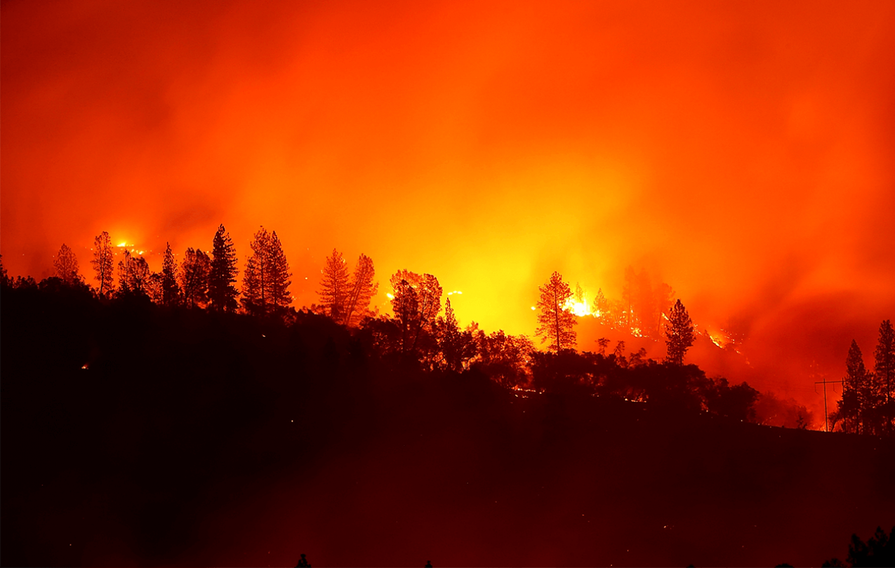 Trees burning on a hillside engulfed in flames